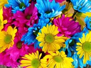 daisys_flowers_bloom_221809