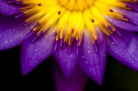 purple_flowers_closeup_highdefinition_picture_166790