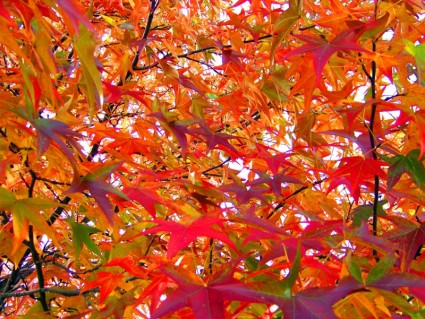 autumn_leaves_196053