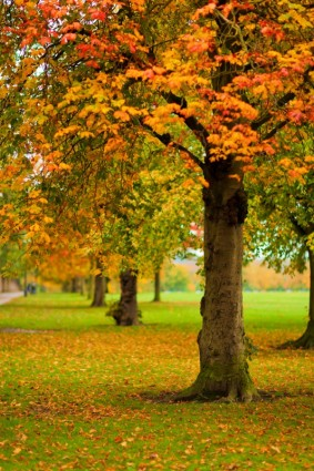 autumn_park_208853